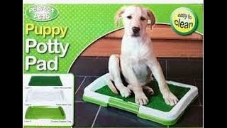 Stassi the Tzu - How to potty train your puppy to use puppy pads - Stassi the Tzu