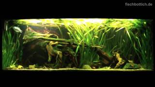 [HD] Start Of The Series: My Southeast Asia Community Tank / Südostasienbecken [1/1]