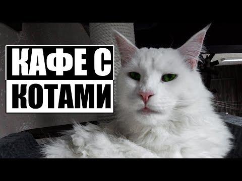 КОТОКАФЕ в Могилёве | И кофе выпил и котов погладил!