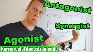 Agonist, Antagonist & Synergist genau aber einfach erklärt!