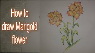 How to draw ¨Marigold Flower¨