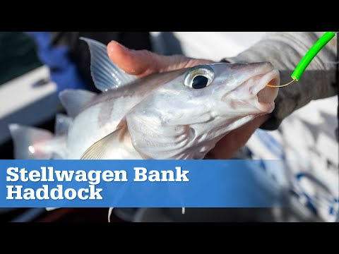 S15 Ep9 - Stellwagen Bank Haddock (Full Episode)