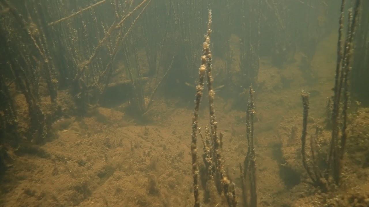 ヨシノボリの泳ぐ池