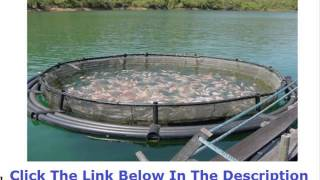 Tilapia Farming Feasibility Study +++ 50% OFF +++ Discount Link