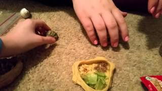 What food to use with your hermit crab