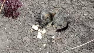 Ненормальный кот ест грибы