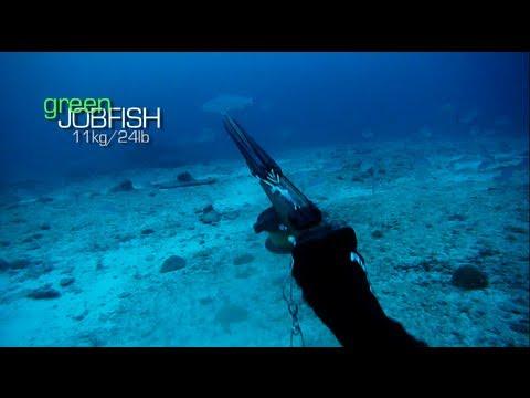 Spearfishing - Stoning A 11kg Green Jobfish