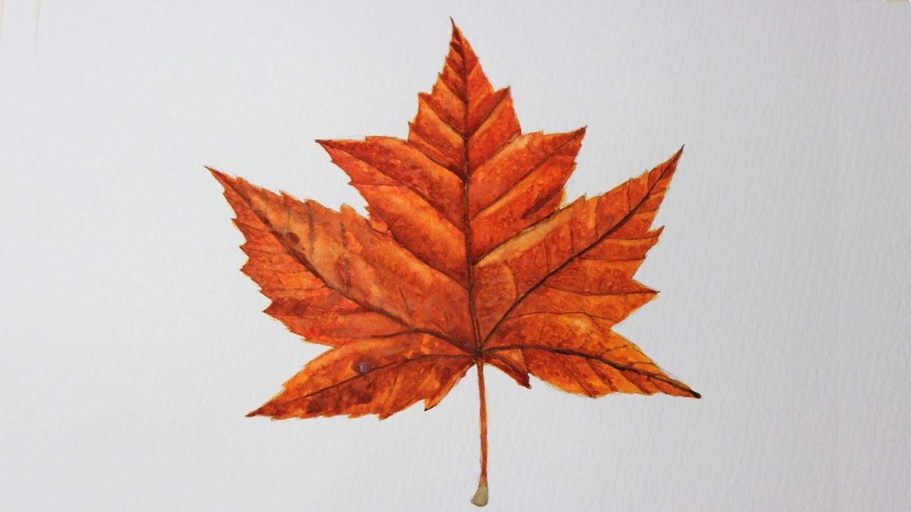 canadian maple leaf images - 1280×720