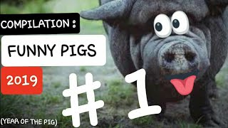 FUNNY ANIMALS COMPILATION #1 : PIGS EDITION  -  YOU LAUGH YOU LOSE 2019