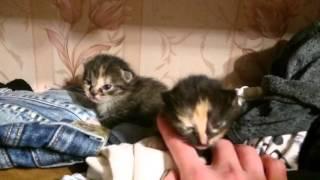 Совсем маленькие котята шипят
