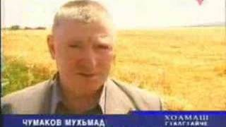 Attack of a locust in village of Vezhary-yurtas