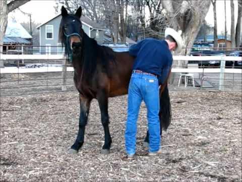 Cora #5, 4 yo BLM Mustang , Progress Update, Sean Davies, Coloradoreinsman