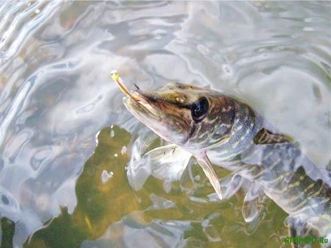 отдых в карелии осенью 2015 с рыбалкой
