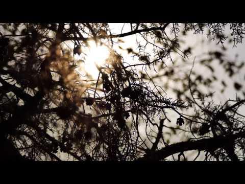Shakespearean Sonnet #135 Video Presentation