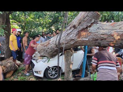 Sangat Dramatis Proses Evakuasi // Mobil Tertimpa Pohon Mangga Puluhan Tahun ..!!!