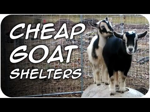 CHEAP Goat Shelters for Winter DIY (40) - YouTube on maltese house plans, swine house plans, goat wagon plans, sheep hoop barn plans, goat housing plans, goat kidding pen plans, dog house plans, goat shelter plans, pygmy lamb, goat feeder plans, pigeon house plans, goat building plans, goat playground plans, snowy owl house plans, ostrich house plans, pygmy owls as pets, diy goat stanchion plans, chicken house plans, goat barn plans,