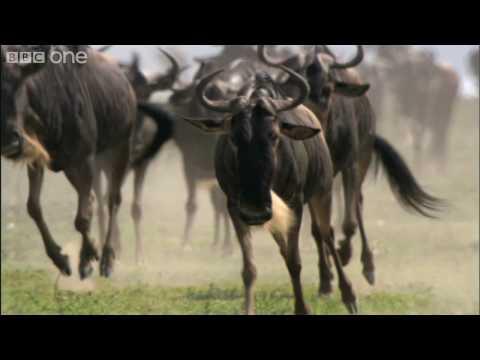 Trailer do filme The Great Migration