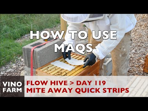 Flow Hive - How to Treat Varroa with MAQS - Day 119 (Part 2)