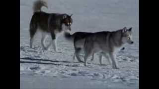 Gregorian ft Antarctica - The Moment of peace