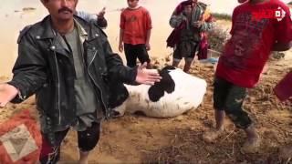أهالي «عفونة»: السيول جرفت محصول بمئات الآلاف وقتلت الماشية غرقا (اتفرج)