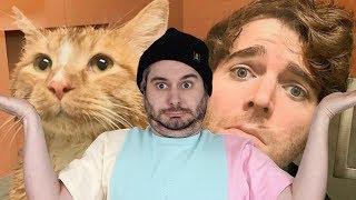 Shane Dawson Did WHAT With His Cat?! thumbnail