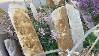 Whats Blooming Wednesday: Crevice Garden