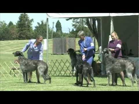 The 2011 Scottish Deerhound National Specialty Show
