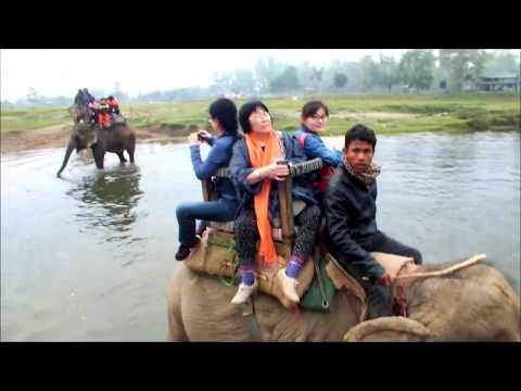 Chitwan National Park,Nepal 2015 ネパールチトワン国立公園のすべて~エレファントサファリ、カヌー(泊:ホテルジャングルビスタ)