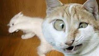 Обожаю ИнтерNet   Аэропорт владивостока.Кошка ест рыбу прямо с витрины.(В аэропорту в городе Владивосток, милая рыжая кошка устроила пир на весь мир! Раскрути свой канал! http://smofast.co..., 2014-12-14T10:41:19.000Z)