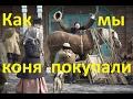 Сказ том, как мы первого коня покупали. (Байка-2)