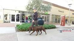 Best Dog Training Arizona Board and Train Program