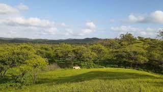 Monsoon beauty   લીલુંછમ ગીર    Sasan gir forest safari   Gir National Park