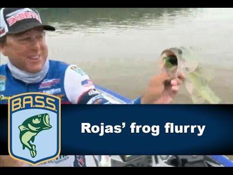 Rojas' Lake Dardanelle frog flurry