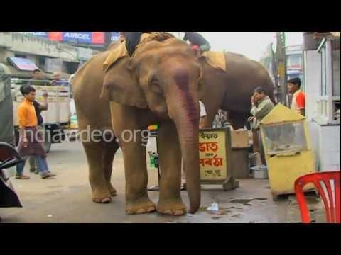Elephants at Guwahati, Assam