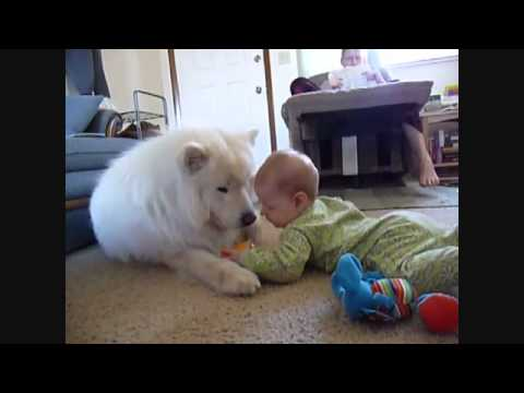 Funny Baby Videos- Baby Plays With Furry White Dog