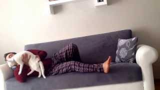 Uyutmayan kedi pamuk :(