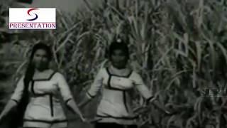Gore Rang Pe Loki Chor | Chambe Di Kali @ Indira Billi, V. Gopal, P. Jairaj (Punjabi Song)