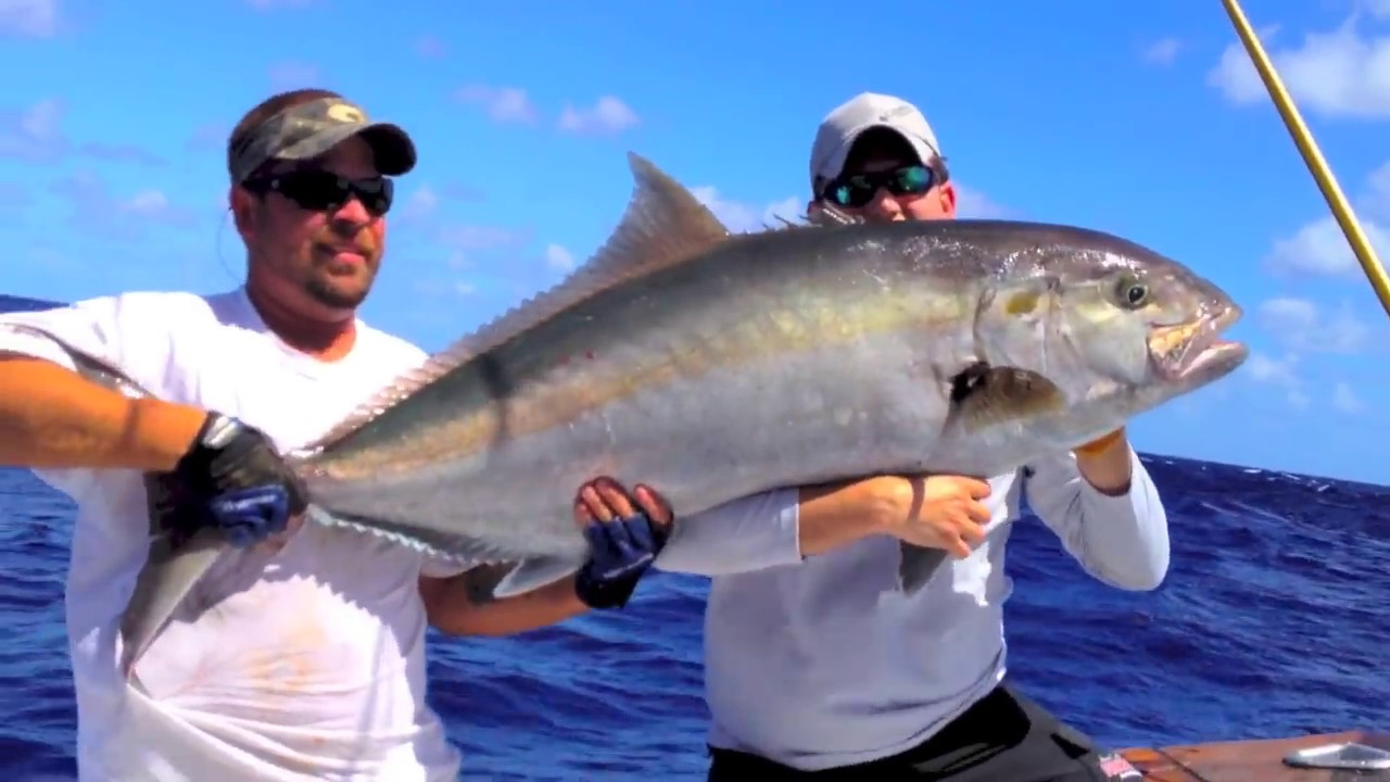 Amberjack | Giant Amberjack Fishing In Islamorada Florida 2012 Youtube