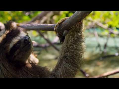 The Scottish Talking Animals - PART 2