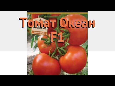 Томат обыкновенный Океан F1 (okean f1) 🌿 томат Океан F1 обзор: как сажать семена томата Океан F1