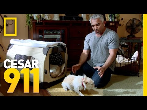 Surrender State | Cesar 911