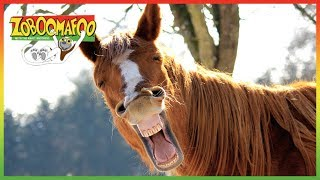 🐵🐴 Zoboomafoo 128 | Horses | Animal shows for kids | Full Episode | HD 🐵🐴