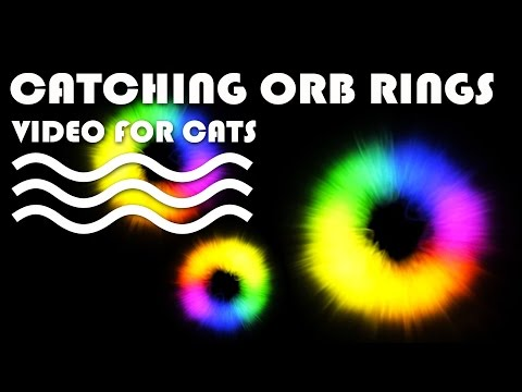 ENTERTAINMENT VIDEO FOR CATS. Cat Game on Screen. Catching Colorful Orb Rings.
