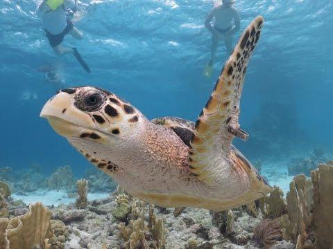 Bonaire, Lesser Antilles (Divers Paradise)