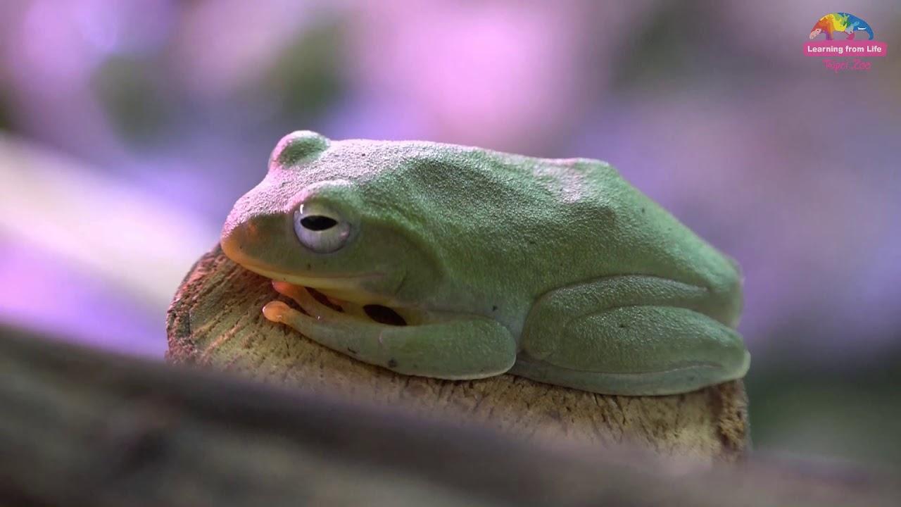 現象 蛙 男 化 蛙化現象女は最低なモラハラ男と同じ?