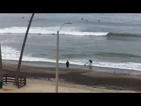 Kristin Lessard & Steve Kelly  - Homeless Man Saves Baby Shark Stranded on Beach!
