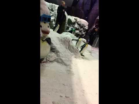 (Ski dubai) Penguin's are so loved❤️