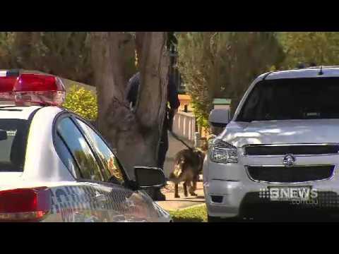 Dramatic Arrest | 9 News Adelaide