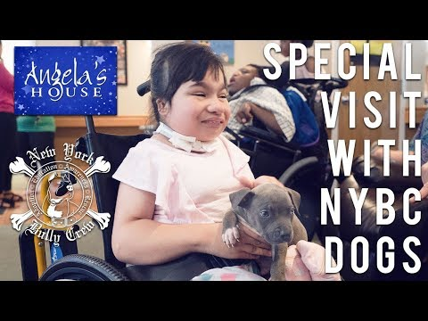 NYBC Puppies Visit Special Children  | New York Bully Crew