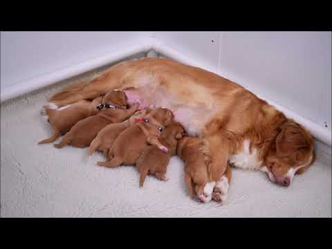 Patty's Puppies Present:  Feeding Time